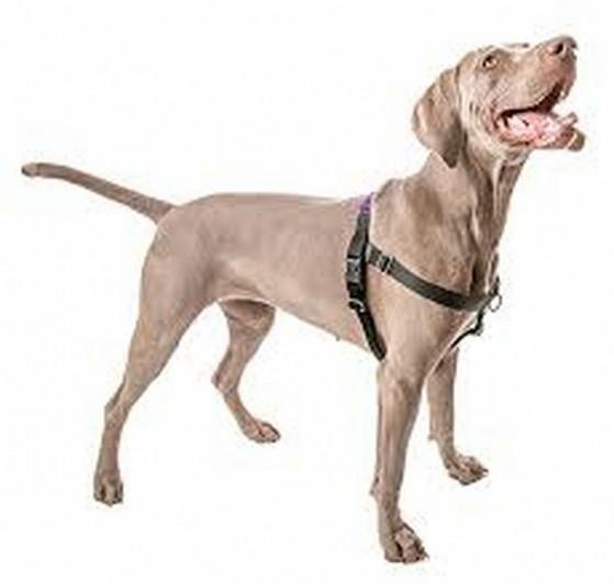 Comprar Guia Peitoral Cachorro Morumbi - Peitoral com Guia para Cachorro