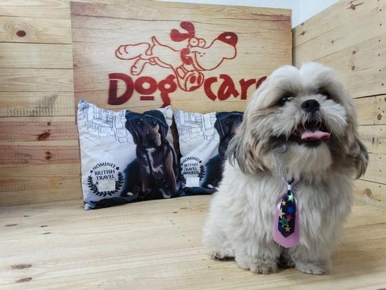 Comprar Lacinho de Cachorro Alphaville - Laços de Fita para Pet Shop