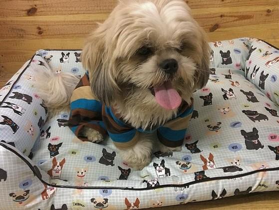 Distribuidor de Roupinhas para Cachorro de Frio Parque do Carmo - Fábrica de Capa Veludo de Cachorro