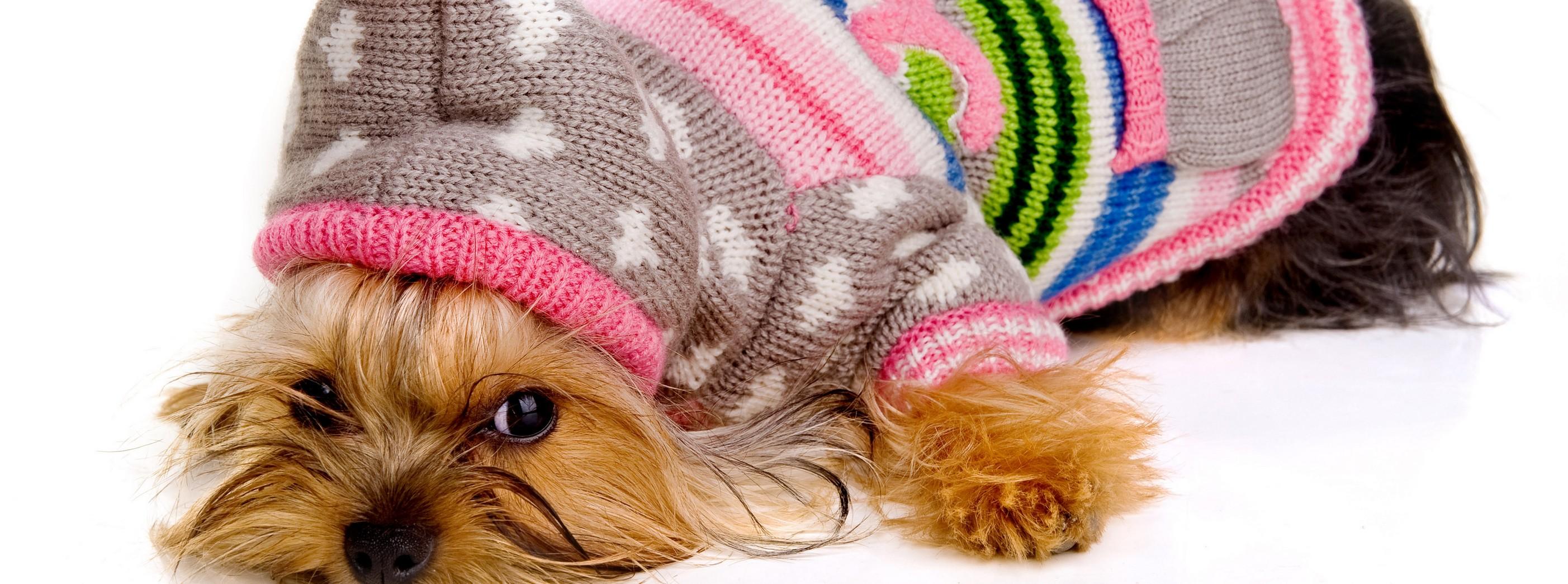 dogcare-fabrica-de-fralda-descartavel-para-cachorro