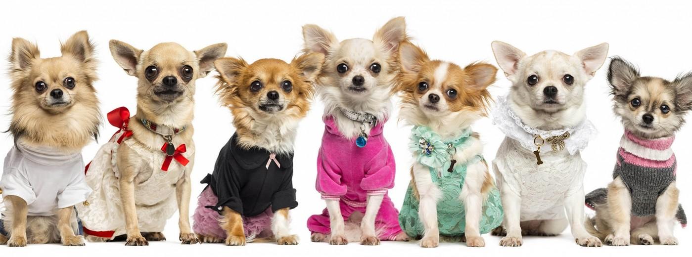 dogcare-fabrica-de-roupas-para-cachorro