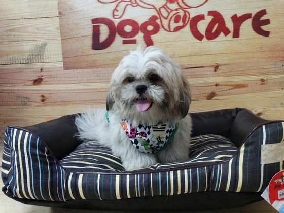 Fábrica de Caminhas para Cachorro de Tecido São Caetano do Sul - Camas para Cachorro Iglu