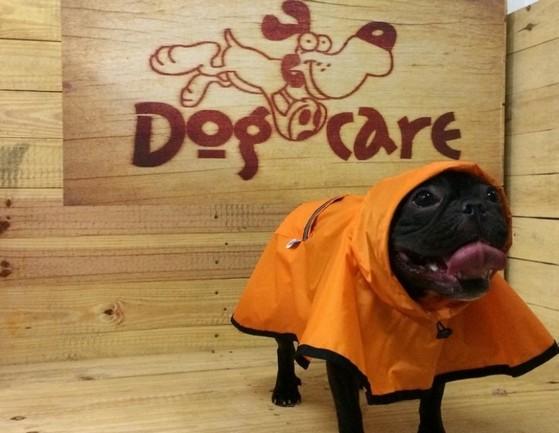 Fábrica de Capa Soft para Cachorro Centro - Fábrica de Capa Veludo de Cachorro