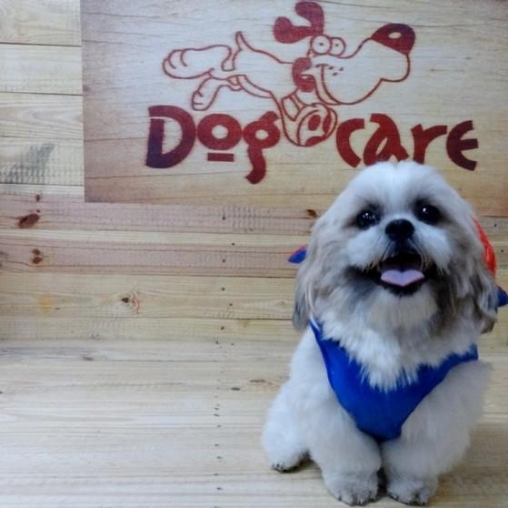Fábrica de Capa Veludo de Cachorro Valores Sorocaba - Fábrica de Capa Veludo de Cachorro