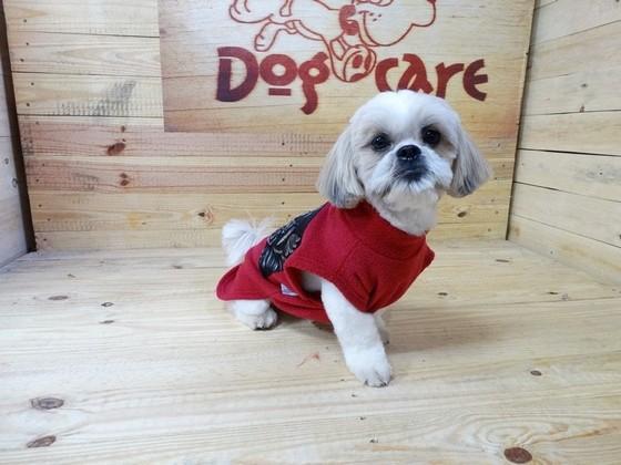 Fábrica de Cobertor de Soft para Cachorro Brasilândia - Fábrica de Manta Soft para Cachorro