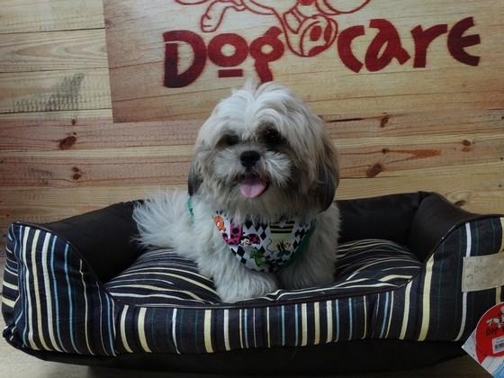 Fábrica de Cobertores para Cachorro Jaguaré - Fábrica de Manta Soft para Cachorro