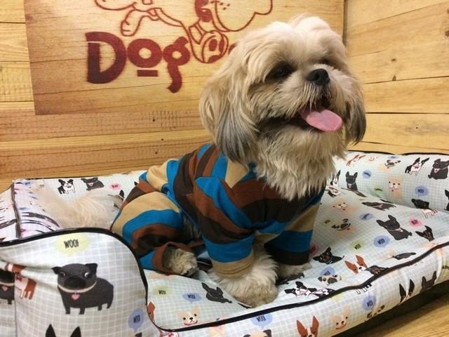 Fábrica de Fralda de Cachorro Cajamar - Fábrica de Fralda Absorvente Cachorro