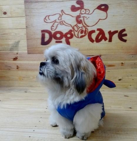 Fábrica de Fralda para Cachorro Atacado Diadema - Fábrica de Fralda Absorvente Cachorro