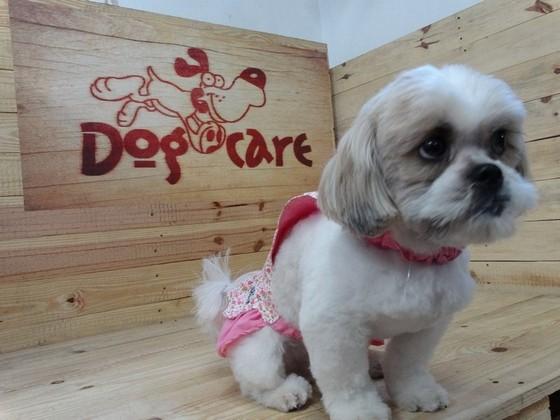 Fábrica de Roupinhas para Cachorro Pequeno Jabaquara - Fábrica de Capa Veludo de Cachorro