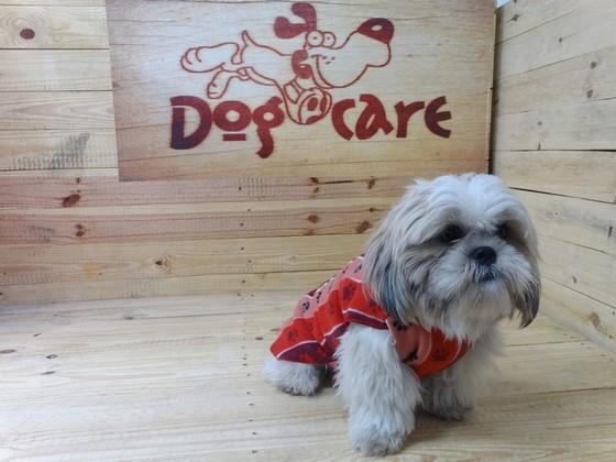 Fabricante de Cobertores de Cachorro Valores Jardins - Fábrica de Manta Soft para Cachorro
