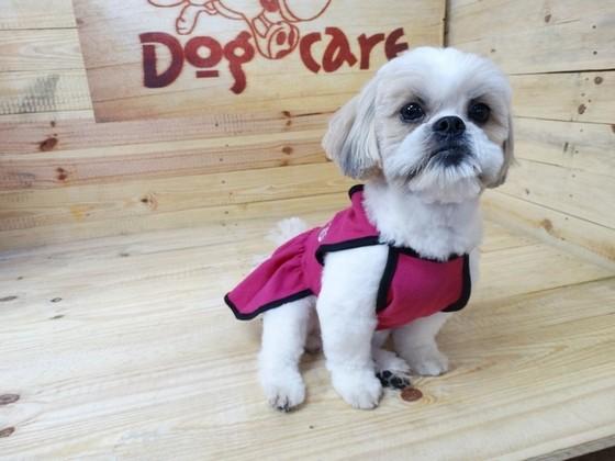 Fábricas de Cobertores de Soft para Cachorro Pari - Fábrica de Manta Soft para Cachorro