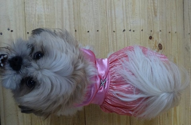 Fornecedor de Fralda Absorvente para Cachorro Atacado Parque do Carmo - Fábrica de Fralda Absorvente Cachorro