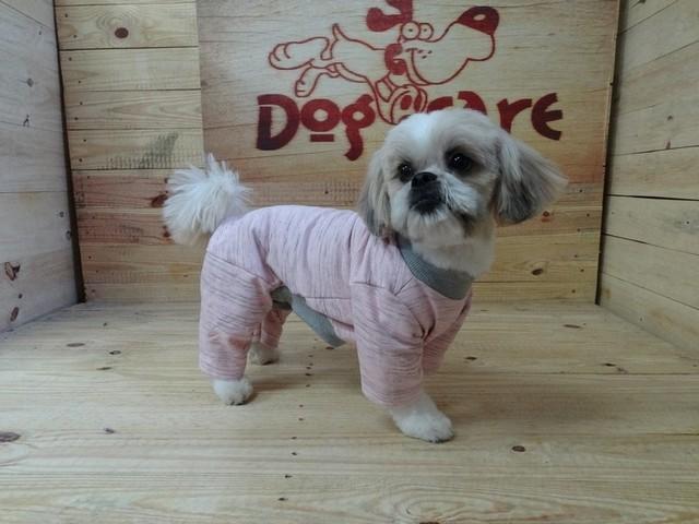 Fornecedor de Fralda Absorvente para Cachorro Itatiba - Fábrica de Fralda Absorvente Cachorro