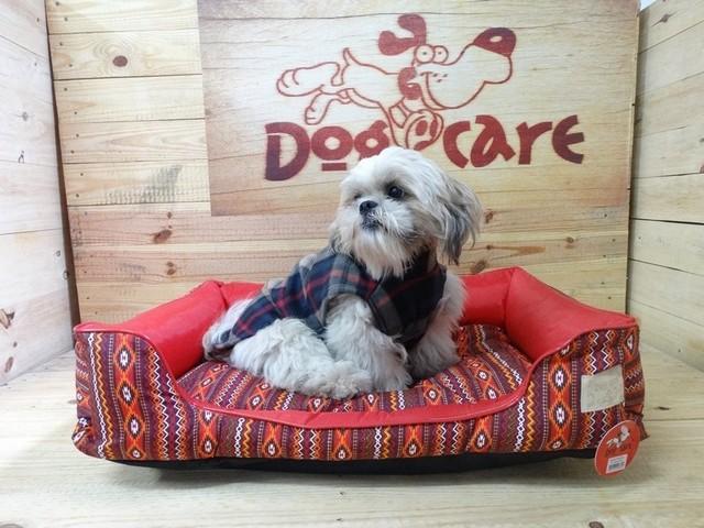 Fornecedor de Fralda Higiênica para Cachorro São Sebastião - Fábrica de Fralda Absorvente Cachorro