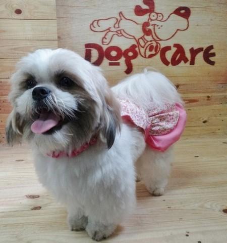 Fornecedor de Fralda para Cachorro Filhote Atacado Jardins - Fábrica de Fralda Absorvente Cachorro