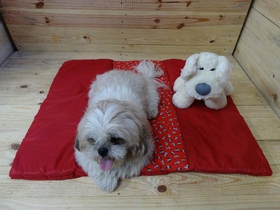 Lacinho de Cachorro Capão Redondo - Laços de Fita para Pet Shop