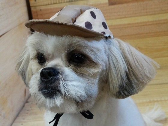 Laço e Gravata para Pet Shop Praça da Arvore - Laços de Fita para Pet Shop