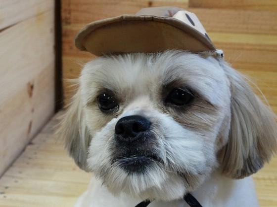 Laço para Banho e Tosa Atacado Taubaté - Laços de Fita para Pet Shop