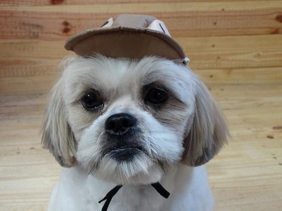Onde Encontrar Fábrica de Bolsa Canguru Cachorro Bertioga - Fábrica de Bolsa Canguru de Cachorro