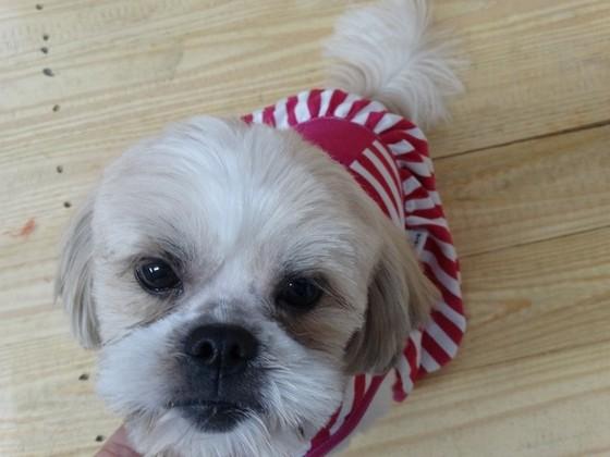 Onde Encontrar Fábrica de Cobertor de Soft para Cachorro Sorocaba - Fábrica de Manta Soft para Cachorro
