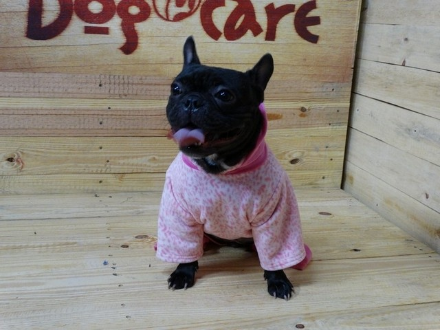 Onde Encontrar Fábrica de Fralda Absorvente Cachorro Vila Formosa - Fábrica de Fralda Absorvente Cachorro