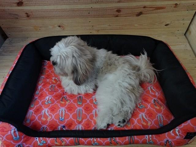 Onde Encontrar Fábrica de Fralda para Cachorro PP Luz - Fábrica de Fralda Absorvente Cachorro