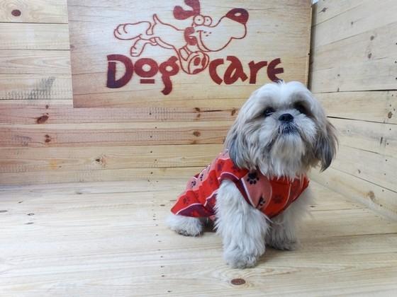 Onde Encontrar Fábrica de Peitoral de Lona para Cachorro Bertioga - Fábrica de Capa Veludo de Cachorro