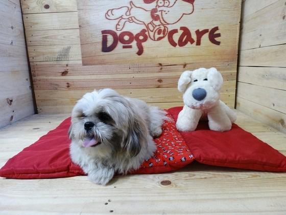 Onde Encontrar Fábrica de Peitoral para Passeio para Cachorro ABC - Fábrica de Capa Veludo de Cachorro