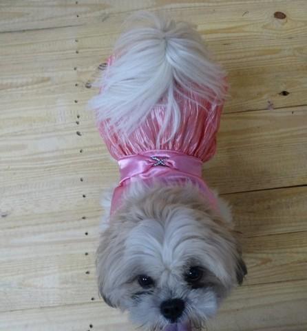 Onde Encontrar Fornecedor de Fralda Absorvente para Cachorro Mongaguá - Fábrica de Fralda para Cachorro