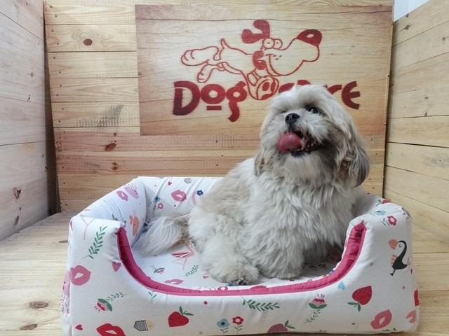 Onde Encontrar Fornecedor de Fralda Higiênica para Cachorro Capão Redondo - Fábrica de Fralda Absorvente Cachorro