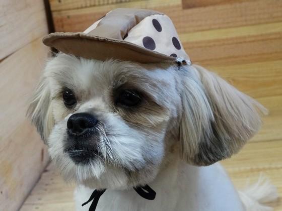 Onde Encontro Fábrica de Bolsa Canguru para Transporte de Cães Franca - Fábrica de Bolsa Canguru de Cachorro
