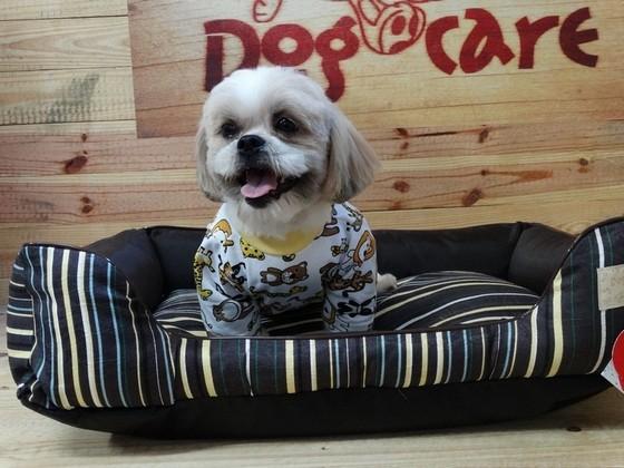 Onde Encontro Fábrica de Cobertor Microfibra de Cachorro São Carlos - Fábrica de Manta Soft para Cachorro