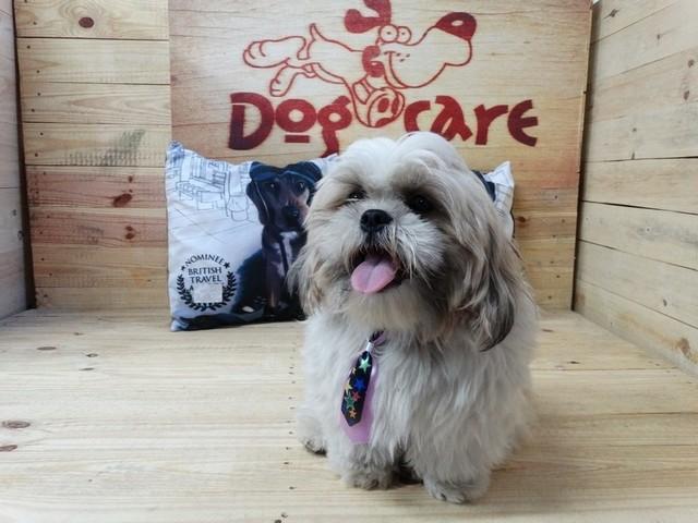 Onde Encontro Fábrica de Fralda de Cachorro para Revenda Itanhaém - Fábrica de Fralda Absorvente Cachorro
