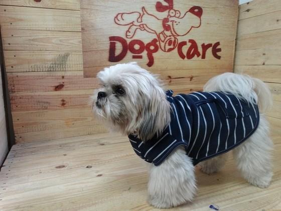 Onde Encontro Fábrica de Peitoral de Lona para Cachorro Belém - Fábrica de Capa Veludo de Cachorro