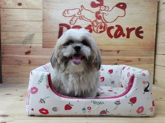 Onde Encontro Fabricante de Cobertores de Cachorro de Algodão Praia Grande - Fábrica de Manta Soft para Cachorro