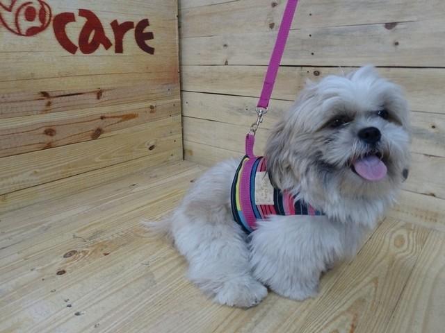 Onde Encontro Fornecedor de Fralda Absorvente para Cachorro Araras - Fábrica de Fralda Absorvente Cachorro
