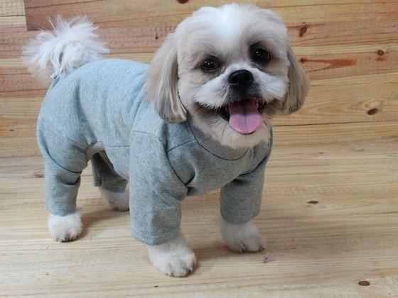 Roupas de Moletom para Cães Socorro - Roupinhas e Acessórios para Cachorros