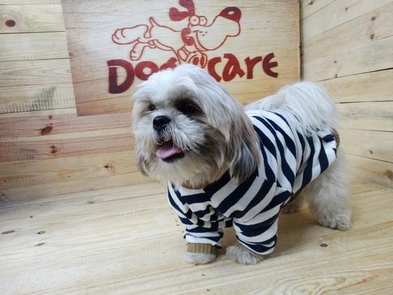 Roupinha para Cachorro Jardins - Fábrica de Capa Veludo de Cachorro