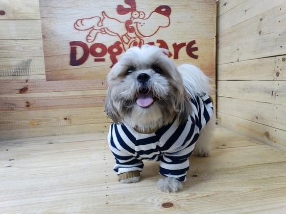 Roupinhas de Moletom para Cachorro Atacado Imirim - Fábrica de Capa Veludo de Cachorro