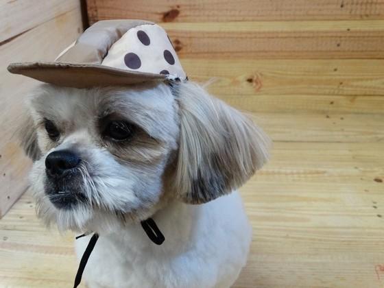Roupinhas e Acessórios para Cachorros Jundiaí - Fábrica de Capa Veludo de Cachorro