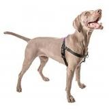 comprar guia peitoral cachorro Santana