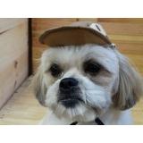 comprar lacinho para cães Assis