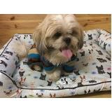 confecção de camas para cachorros valores Campo Grande