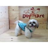 fábrica de capa soft para cachorro valores Cajamar
