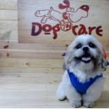 fábrica de capa veludo de cachorro valores Sorocaba