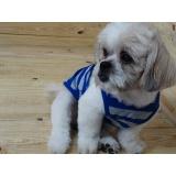 fábrica de fralda para cachorro fêmea atacado Amparo