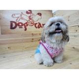 fábrica de fralda para cachorro fêmea Vila Leopoldina