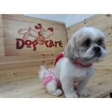 fábrica de roupinhas para cachorro pequeno Bauru