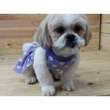 fábricas de roupas e acessórios para cachorro Jaú
