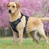 guia peitoral cachorro Caraguatatuba
